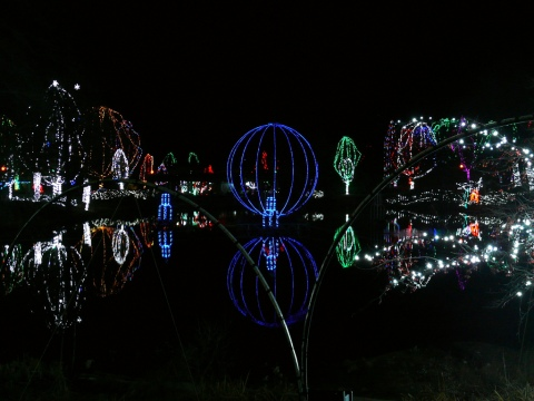 Columbus Zoo Wildlights.jpg